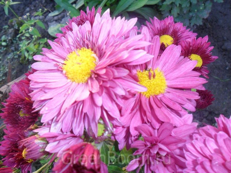 Цветок виталина