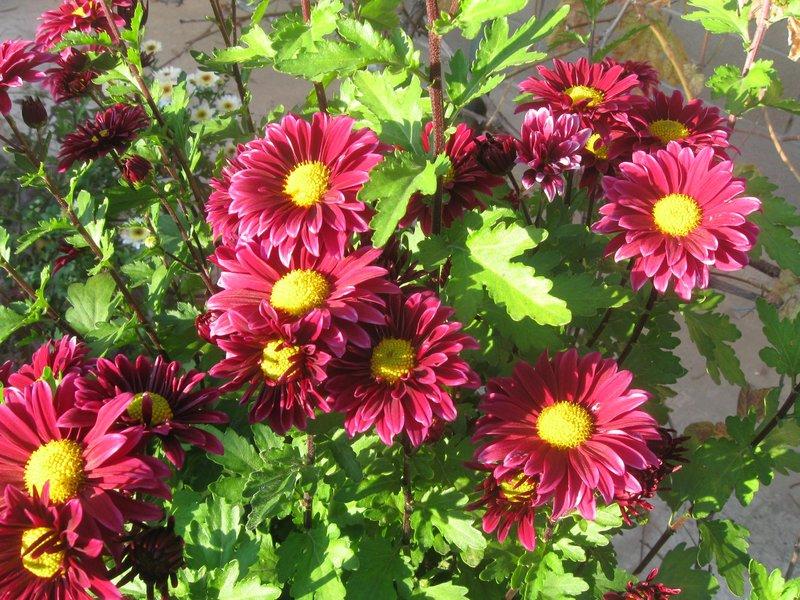 Все садовые цветы каталоги
