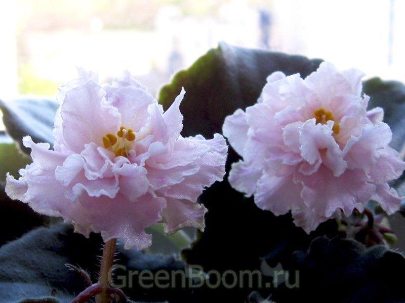 ЦВЕТЫ фото Красивые фото цветов Цветок фото От розы до