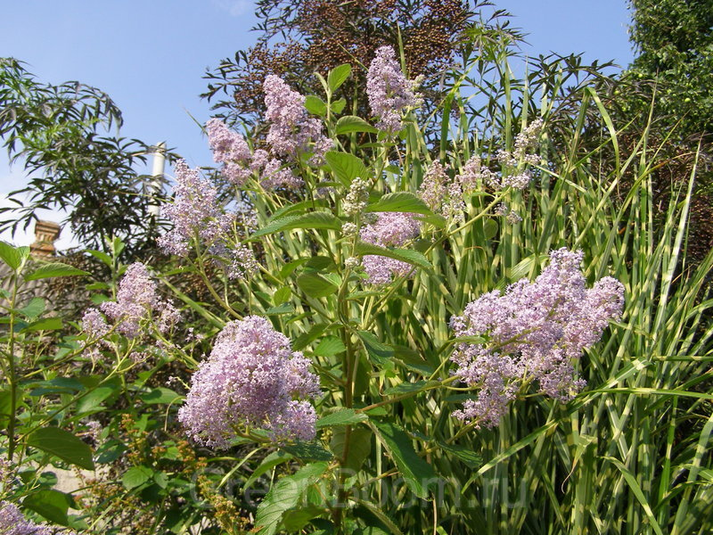 Искусственные цветы и растения оптом