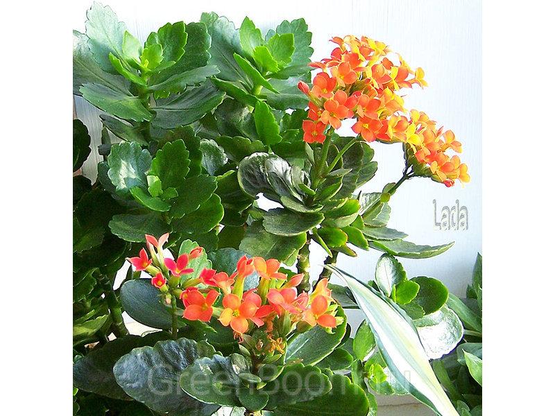 10 лучших комнатных цветков с большими зелёными и пестрыми