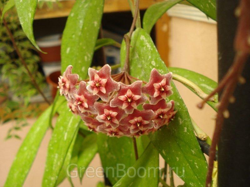 Купить растения продажа и рассылка почтой каталог заказ