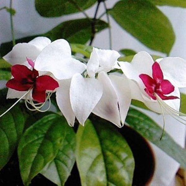 Экзотические цветы комнатные фото